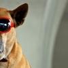 Airbnb para... perros!